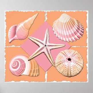 Pink & Orange Sea Shells Poster
