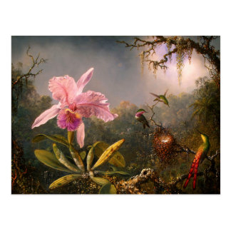 Pink Orchid and Three Hummingbirds Postcard