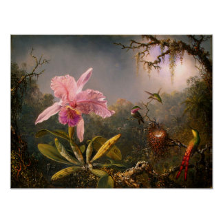 Pink Orchid and Three Hummingbirds Poster