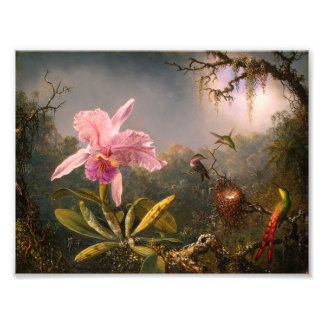 Pink Orchid and Three Hummingbirds Print