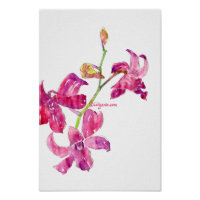 Pink Orchid Babies Floral Sketch Poster Print print