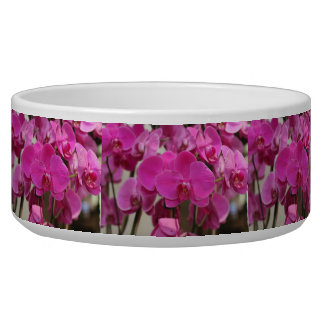 Pink Orchid blooms Bowl