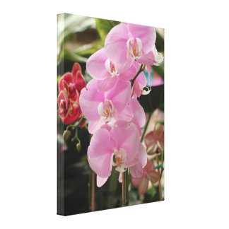 Pink Orchid blooms Canvas Print