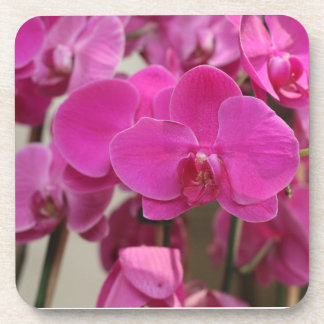 Pink Orchid blooms Drink Coasters