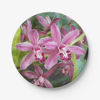 Pink Orchid Blooms Floral Paper Plate