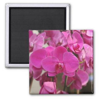 Pink Orchid blooms Fridge Magnet