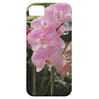 Pink Orchid blooms iPhone SE/5/5s Case