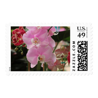 Pink Orchid blooms Postage