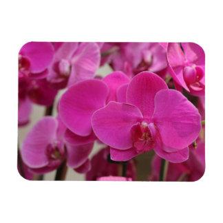 Pink Orchid blooms Vinyl Magnet
