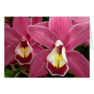 Pink Orchid Card