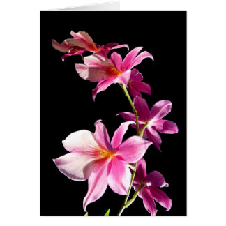 Pink Orchid. Card