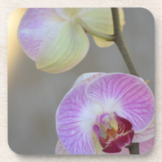 Pink Orchid Expression Coaster Set