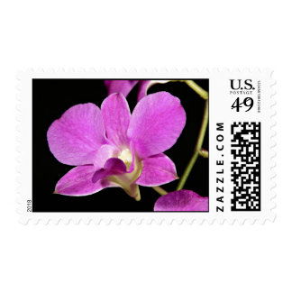Pink Orchid Flower Postage