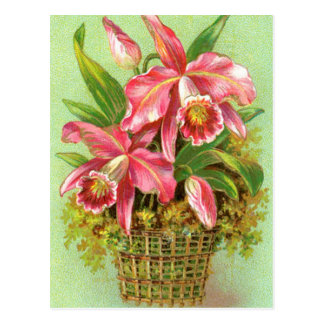 Pink Orchid Flower Postcard