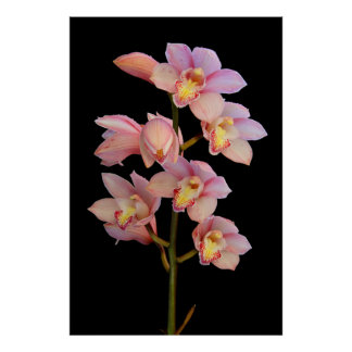 Pink orchid flower poster