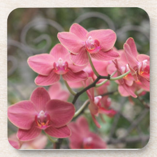 Pink Orchid flowers Beverage Coaster