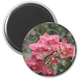 Pink Orchid flowers Fridge Magnets