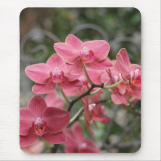 Pink Orchid flowers Mouse Pad