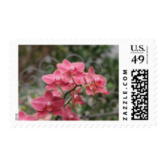 Pink Orchid flowers Postage