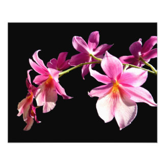 Pink Orchid. Flyer
