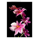 Pink Orchid. Greeting Card
