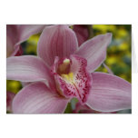 Pink orchid greeting cards