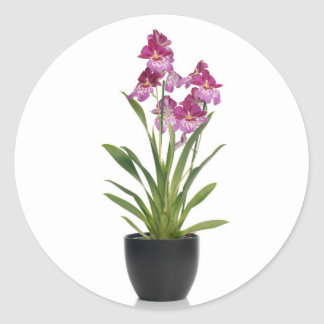 Pink orchid in a pot classic round sticker