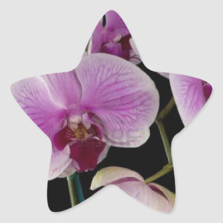 pink orchid.jpg star sticker