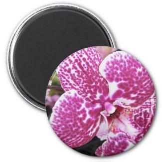 Pink Orchid Magnet magnet