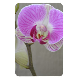 Pink Orchid Magnet