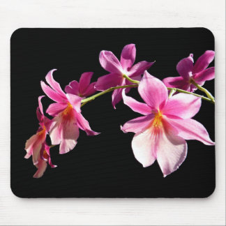 Pink Orchid. Mouse Pad