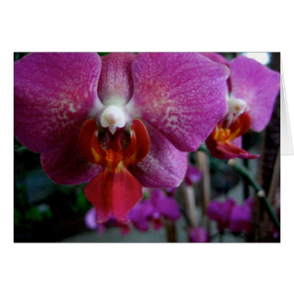 Pink Orchid Notecard Stationery Note Card