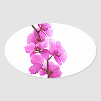 """""""Pink orchid"""" Oval Sticker"""