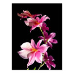 Pink Orchid. Postcard