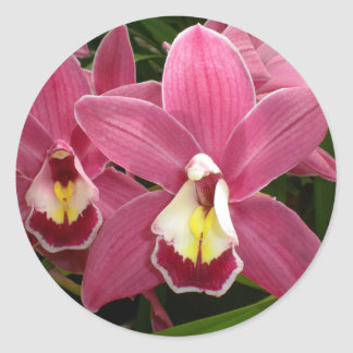 Pink Orchid Stickers