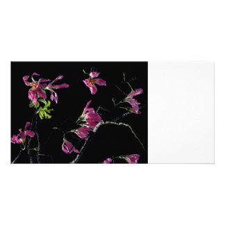 pink orchid tree branches black photo cards