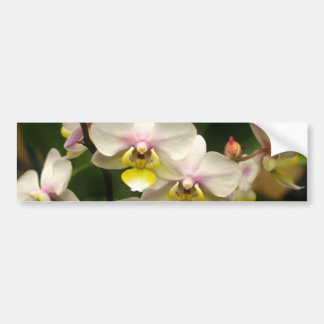Pink Orchids Car Bumper Sticker