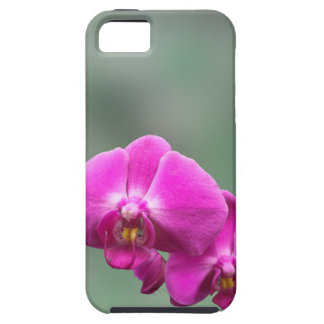 Pink Orchids iPhone 5 Case
