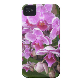 Pink Orchids Case-Mate iPhone 4 Cases
