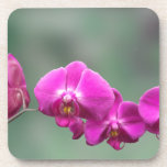 Pink Orchids Coaster
