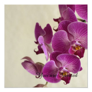 Pink Orchids Flowers Card