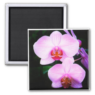 Pink Orchids from Paradise Fridge Magnets