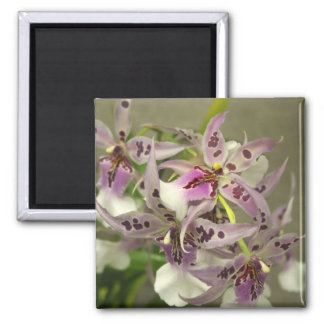 Pink Orchids Magnet