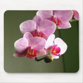 Pink Orchids Mouse Pad