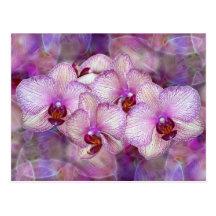 Pink Orchids Postcard
