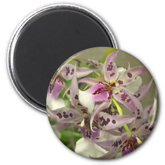 Pink Orchids Refrigerator Magnets
