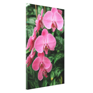 Pink Orchids wrapped canvas
