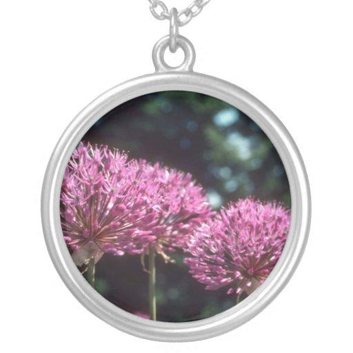 Pink Ornamental Garlic, (Allium Aflatunense) flowe Pendants