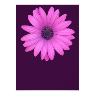 Pink Osteospermum and Transparent Background Card