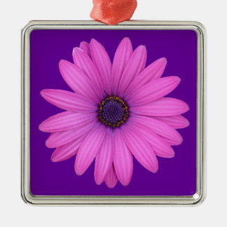 Pink Osteospermum and Transparent Background Metal Ornament